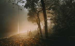 Wallpaper nature, autumn, fog
