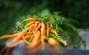 Picture nature, harvest, carrots, the garden, Latio