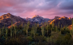 Picture mountains, morning, cacti