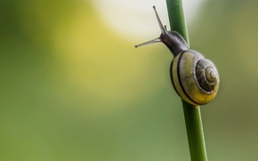 Picture background, snail, grass