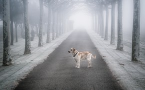 Wallpaper fog, road, dog, loneliness, each