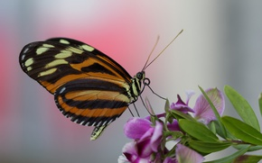 Picture flower, macro, butterfly, tropical butterfly