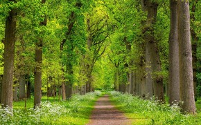 Wallpaper spring, joraga, nature, trees, greens, landscape, beauty