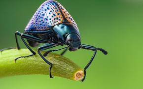 Picture macro, beetle, beetle grebovic