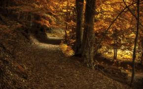 Picture road, autumn, nature, Park