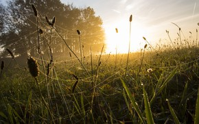 Picture grass, light, morning
