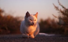 Picture cat, light, street, morning