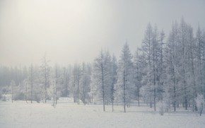 Picture winter, forest, fog