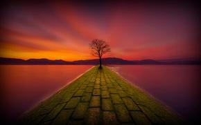Picture night, lake, tree