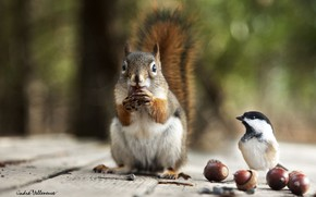 Picture protein, bird, acorns, blur bokeh
