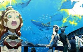 Picture fish, people, aquarium, anime, art, rays