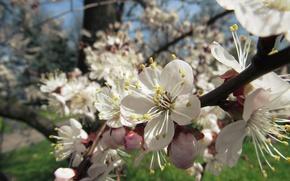 Picture macro, flowers, spring, pirada