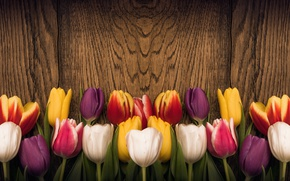 Picture flowers, heart, colorful, tulips, red, love, wood, romantic, tulips, spring