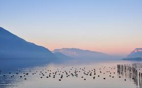 Picture birds, lake, dawn, morning