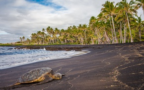 Picture sea, tropics, palm trees, turtle, Hawaii, lies, USA, on the shore