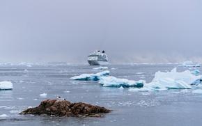 Picture rock, fog, iceberg, cloudy, seagulls, islet, ice floes, transatlantic, cruise ship