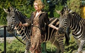 Picture cinema, movie, film, zebra, Jessica Chastain, The Zookeeper's Wife