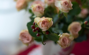 Picture roses, bouquet, buds, bokeh