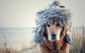 Picture each, dog, hat