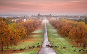 Wallpaper Windsor castle, autumn, deer, jevonte, panorama, England, fog, Park