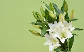Picture flowers, bouquet, buds, Lily
