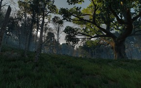 Picture grass, tree, the witcher 3 wild hunt