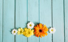 Picture flowers, chrysanthemum, gerbera