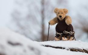 Picture winter, snow, nature, background, mood, clothing, toy, ski, stick, light, bear, bear, athlete, bear, jumpsuit, …