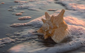Wallpaper sand, foam, water, macro, light, shore, shell