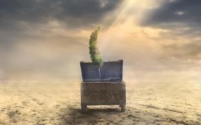 Picture tree, desert, chest, sunbeam