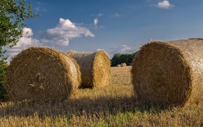 Picture field, summer, the sky, straw