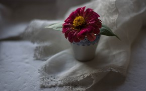 Picture Flower, Pink, Zinnia