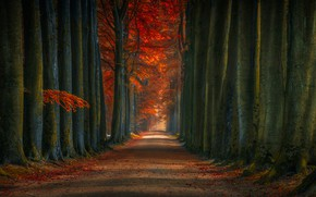 Picture autumn, forest, leaves, trees, Park, track, alley