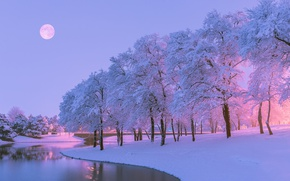 Wallpaper winter, snow, trees, nature, river, the moon, the evening