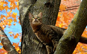 Picture Tree, Cat, Autumn, Fall, Tree, Autumn, Cat