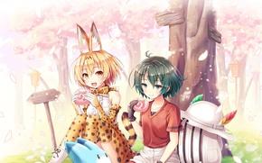 Picture girl, anime, sakura, japanese, bishojo, Kemono Fiends