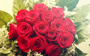 Picture flowers, bouquet, buds, Red roses