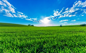 Picture greens, field, summer, the sky, grass, the sun, clouds, trees