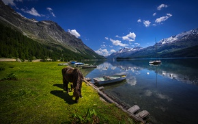 Picture forest, grass, trees, mountains, lake, rocks, shore, horse, boats, Switzerland, Lake Sils