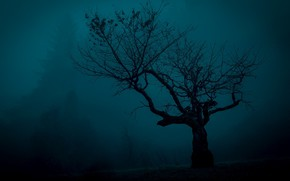 Picture night, fog, tree, mystic, silhouette, the dark tones
