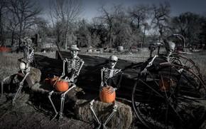 Wallpaper Happy Hallowe'en, skeletons, pumpkin