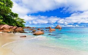 Wallpaper the sun, tropical, summer, beach, sand, sea, sand, sea, beach, palms, shore, island, paradise, palm ...
