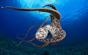 Picture sea, octopus, water