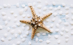 Picture background, shell, starfish, summer, wood, marine, starfish, composition, seashells