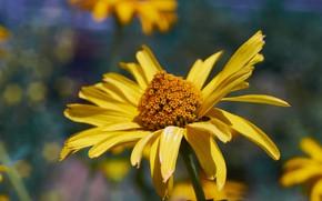Picture Macro, Yellow, Flower