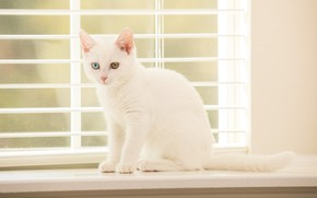 Picture kitty, eyes, window
