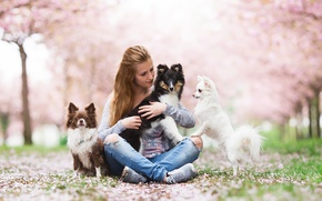 Picture dogs, girl, mood, friends