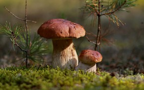 Picture autumn, forest, leaves, nature, mushrooms, moss, October, aspen