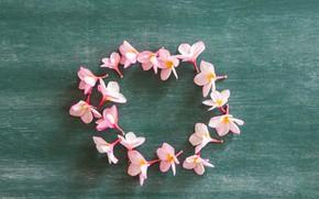 Picture flowers, petals, pink, wood, pink, flowers, petals, plumeria, plumeria