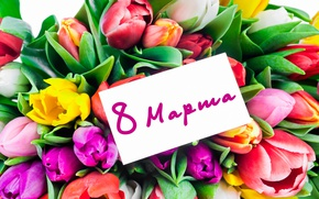 Wallpaper bouquet, colorful, tulips, love, fresh, March 8, flowers, romantic, tulips